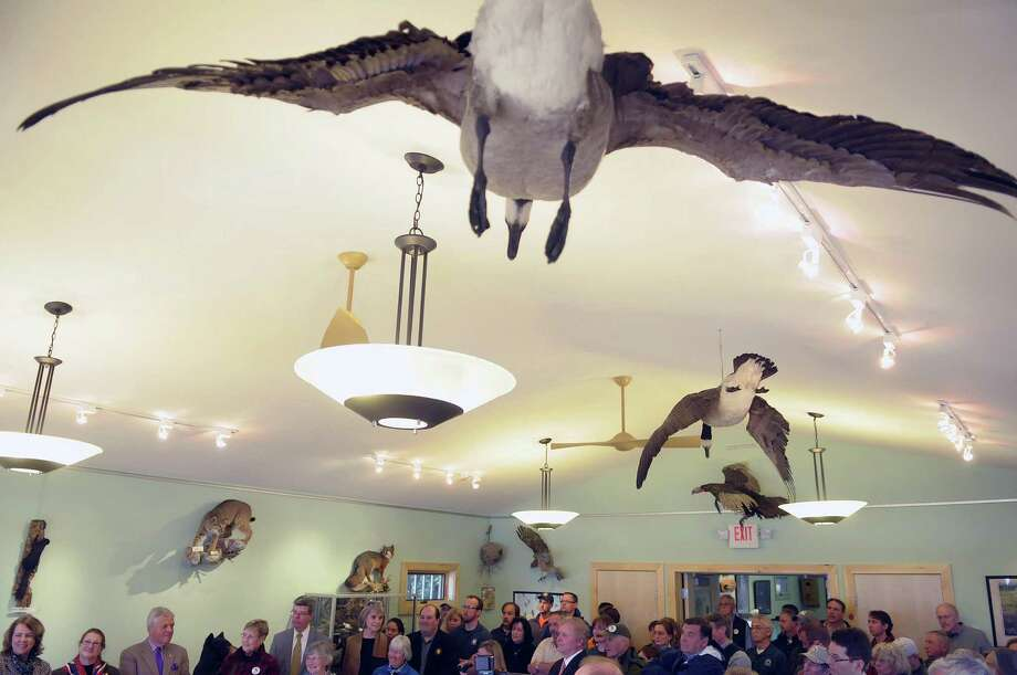 Preserved geese hang from the ceiling as people gather for a ceremony to unveil the newly expanded Nature Center at Moreau Lake State Park on Monday, April 23, 2012 in Moreau, NY.  Money from New York Works Fund were used in the project.  (Paul Buckowski / Times Union) Photo: Paul Buckowski, Albany Times Union / 00017369A