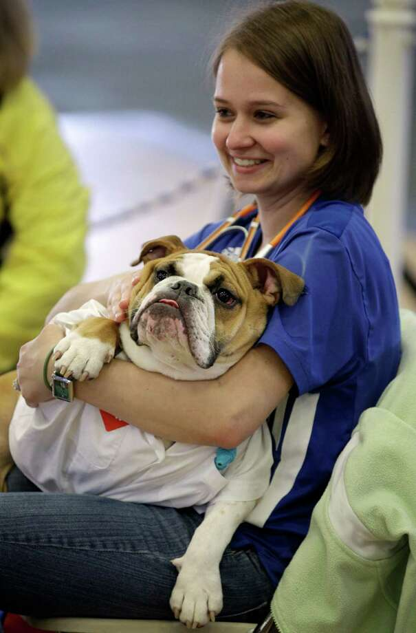Elizabeth Ahrens, of La Vista, Neb., holds her dog Scruffy during the 33rd annual Drake Relays Beautiful Bulldog Contest Monday, April 23, 2012, in Des Moines, Iowa. The pageant kicks off the Drake Relays festivities at Drake University where a bulldog is the mascot. Photo: Charlie Neibergall, AP / AP
