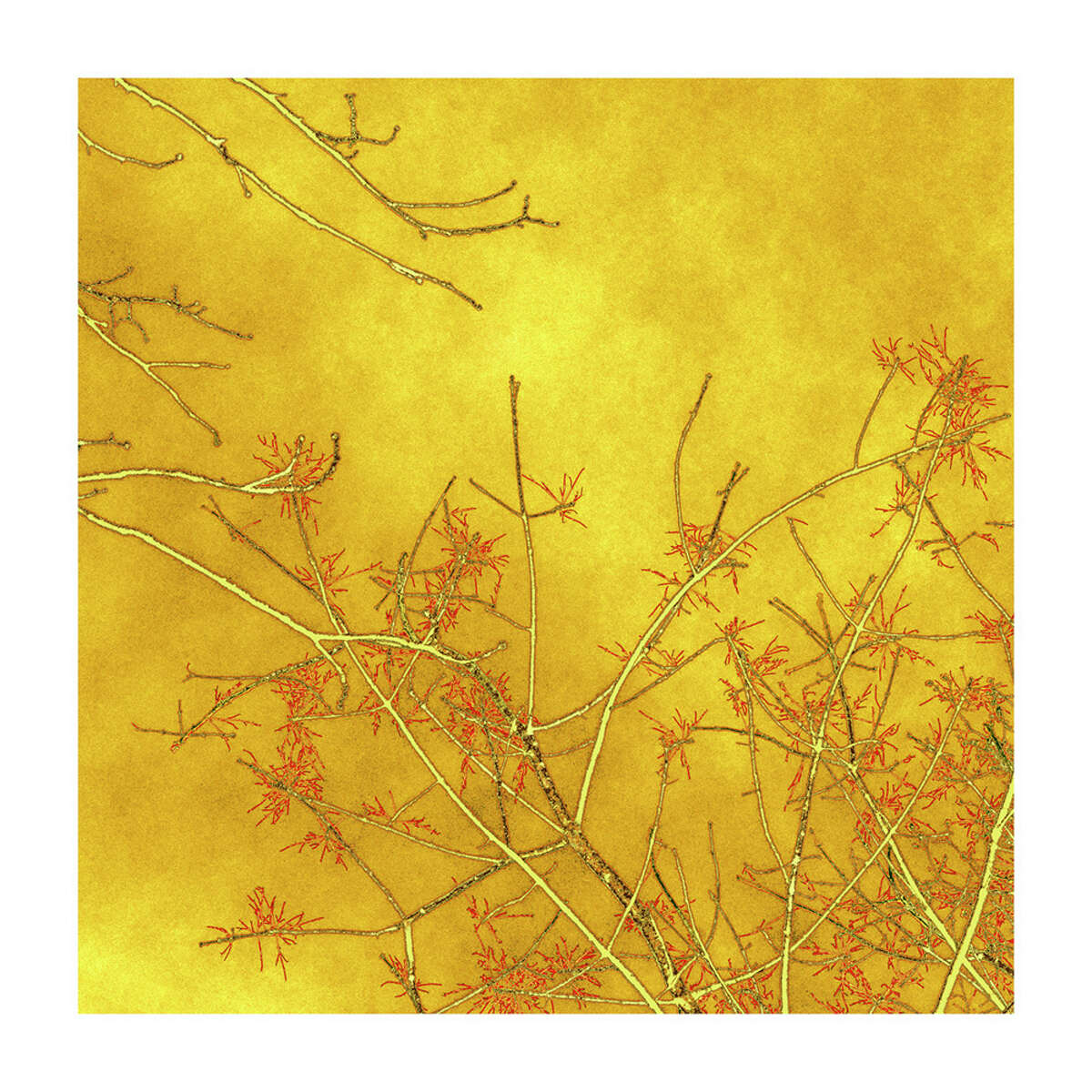 """Nancy Woodward's """"Branch Sprite,"""" varnished archival pigment print on tissue, is on display at the Darien Nature Center's """"EarthWorks"""" exhibit."""