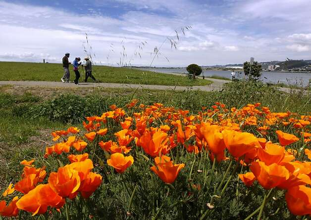 Hikers walk past poppies in full bloom at the Berkeley Marina on Wednesday, April 25, 2012. The San Francisco metropolitan area has dropped off the list of the top 25 most polluted regions in the nation, according to the American Lung Association's annual report on air quality and four of the nine cleanest counties in the state are in the Bay Area. Photo: Paul Chinn, The Chronicle