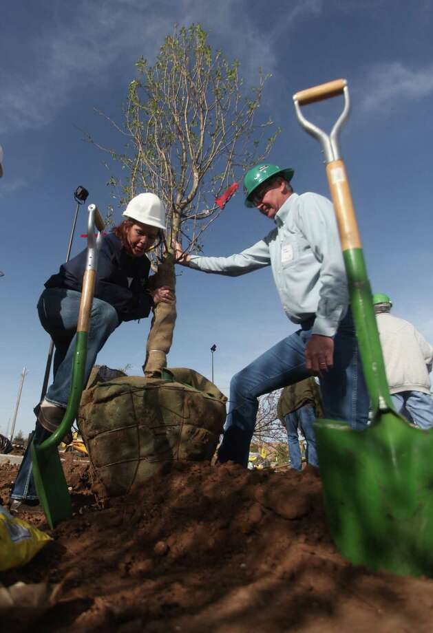 Most trees can be planted all year long. Photo: MBO / The Hutchinson News