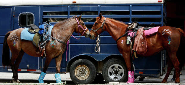 metro - Horses of the True Women Drill Team from Seguin wait for their turn in the parade during the Battle of Flowers Parade on Friday, April 27, 2012. Bria Webb/Special to the Express-News Photo: BRIA WEBB, San Antonio Express-News / © 2012 San Antonio Express-News