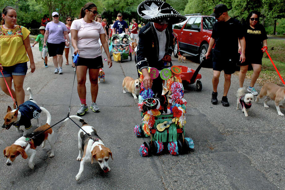 Charlie Benegas, center, pushes Paco, his three-year-old Blue Chihuahua wearing a matching Mariachi outfit, during the Fiesta Pooch Parade in Alamo Heights on Saturday, April 28, 2012. Photo: Lisa Krantz, SAN ANTONIO EXPRESS-NEWS / SAN ANTONIO EXPRESS-NEWS