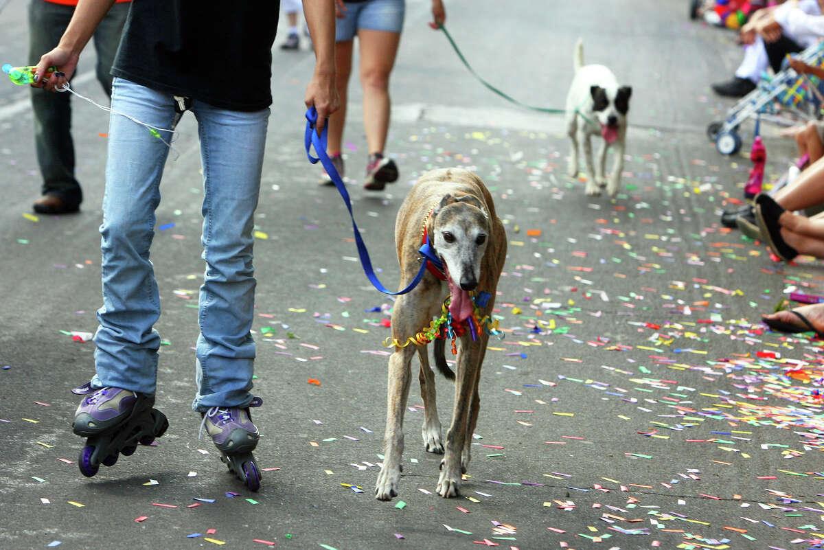 Dogs walk in the Fiesta King William Fair Parade, Saturday, April 28, 2012. (JENNIFER WHITNEY)