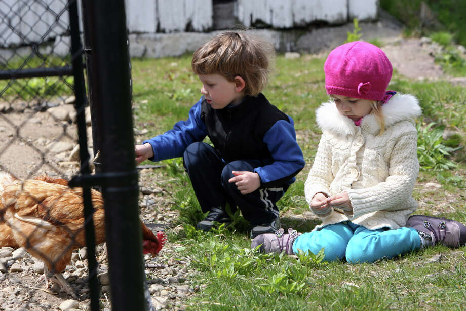 New friends, Remi Rudka and Vanessa Arekhua, both 3, of Stratford. feed grass to the chickens at Boothe Memorial Park in Stratford, Conn. on Monday, April 30, 2012. They met at the park on the playground. Photo: B.K. Angeletti / Connecticut Post