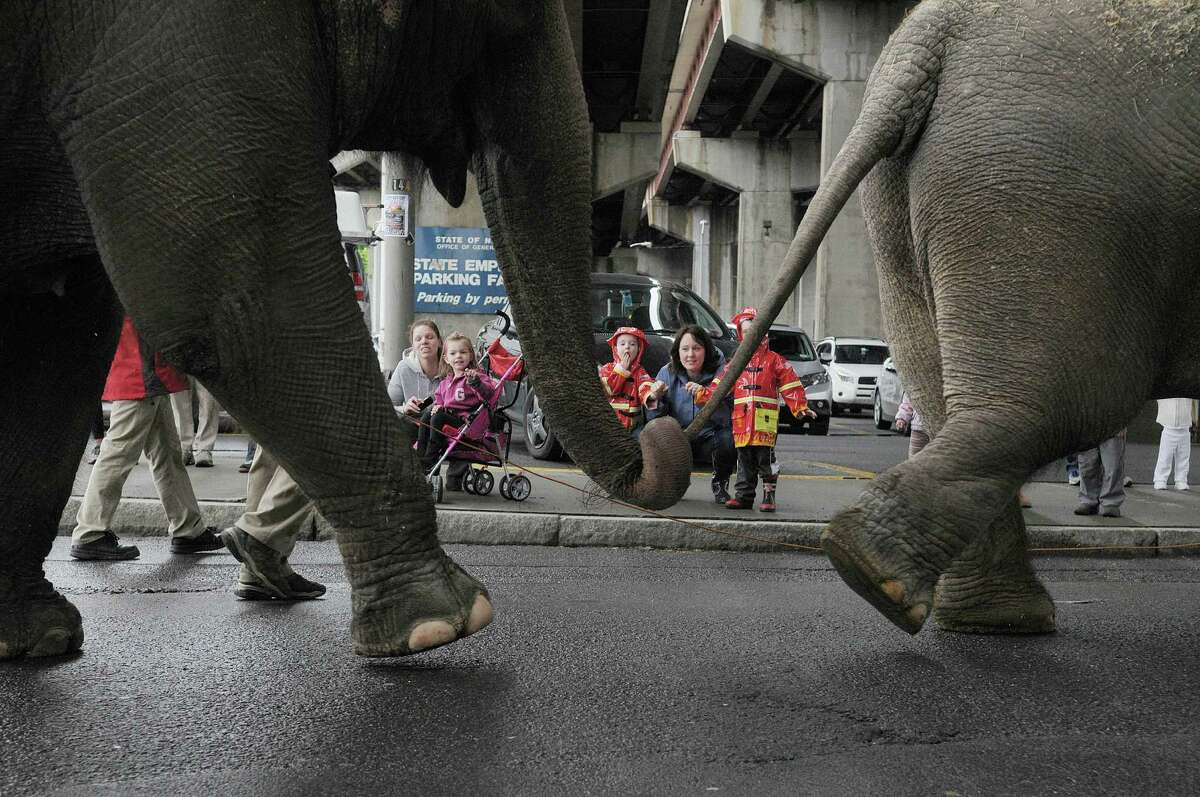 Adults and children watch as elephants and horses with the Ringling Bros. and Barnum & Bailey Circus show paraded to the Times Union Center on Tuesday, May 1, 2012 in Albany, NY. The circus will be at the Times Union Center from May 2nd through May 6th. (Paul Buckowski / Times Union)