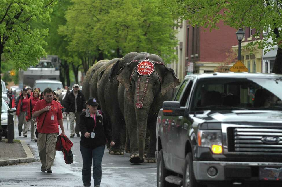 Elephants and horses with the Ringling Bros. and Barnum & Bailey Circus show paraded to the Times Union Center on Tuesday, May 1, 2012 in Albany, NY. The circus will be at the Times Union Center from May 2nd through May 6th. (Paul Buckowski / Times Union)