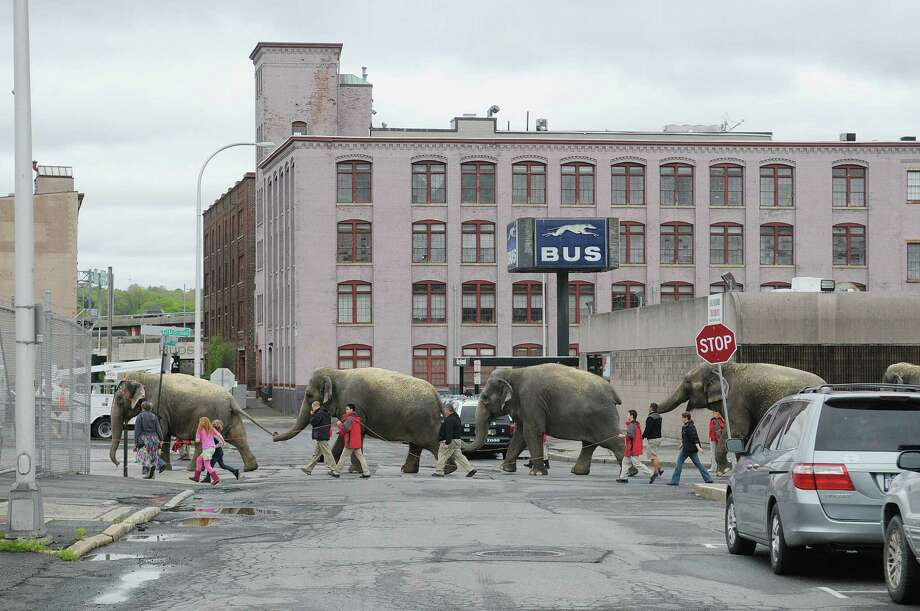 Elephants make their way through downtown as the elephants and horses with the Ringling Bros. and Barnum & Bailey Circus show paraded to the Times Union Center on Tuesday, May 1, 2012 in Albany, NY.  The circus will be at the Times Union Center from May 2nd through May 6th. (Paul Buckowski / Times Union) Photo: Paul Buckowski
