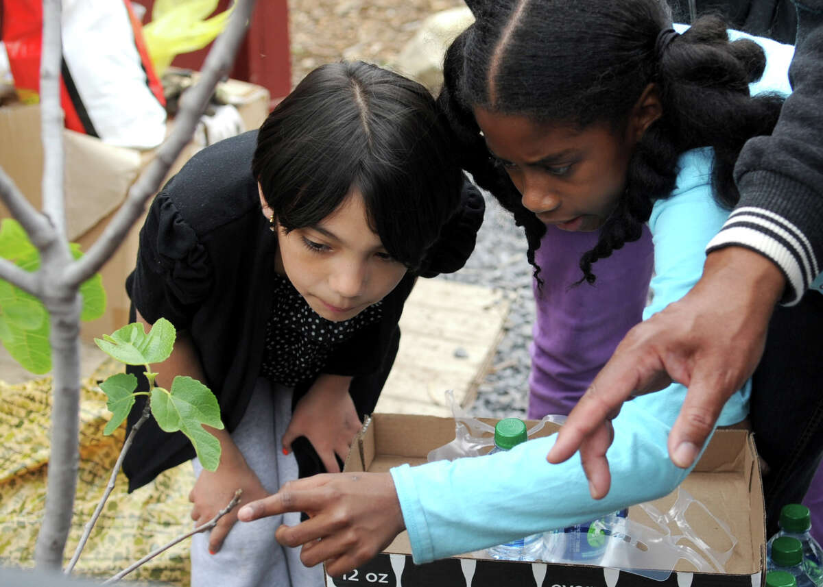 Boys and Girls Club members Citlali Capetillo, 9, left, and Ahhsha Crooks, 8, right, look at a fig tree at Fairgate Community Farm in Stamford during a Day of Service in partnership with Coca-Cola on Tuesday, May 1, 2012.