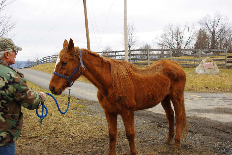 A former racehorse from the herd of the Thoroughbred Retirement Foundation at Walkill prison. (Courtesy Ulster County SPCA).