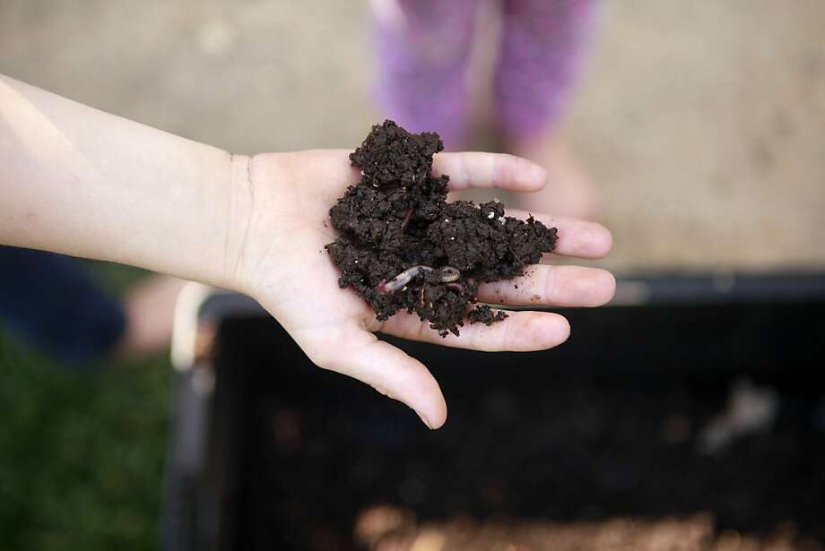 Worms help decompose the compost in Jane Purnell's garden. Jane Purnell is part of the Bay Friendly garden tour. Photo: Sean Culligan, The Chronicle