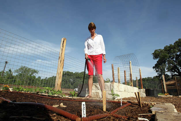 Nature center executive director Carolyn Chipman Evans waters crops at the Herff Farm, which is part of the Cibolo Nature Center. It will serve as an outdoor classroom for teaching sustainable living. Volunteer Mark Mason, below left, tends a keyhole garden. Vegetable markers, below right, were made by volunteers. Photo: JERRY LARA / © 2012 San Antonio Express-News