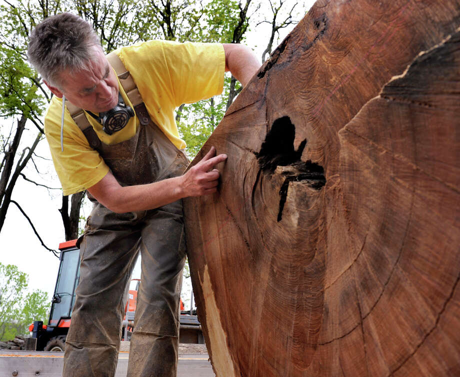 Dennis Hoover of Mystic, who runs a portable sawmill service, examines the rings in the wood of a sycamore tree that he has been hired to cut up on the Halas Farm, Friday, May 4, 2012. Photo: Carol Kaliff / The News-Times