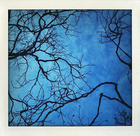 """Sky Veins"" - Spidery branches on Clay Street and Drumm Street. Photo: Meghan Gerzon Rand"