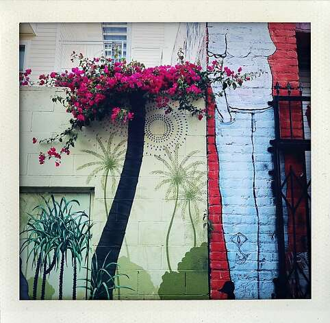 """Clarion Alley"" Painted mural walls and bougainvillea live congruously on Clarion Alley in the Mission. Photo: Meghan Gerzon Rand"