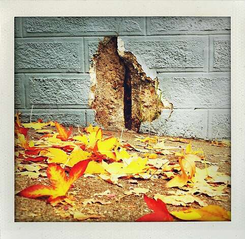 """Wall Crack"" Fallen leaves in the foreground colorfully blanket the sidewalk in front of a cracked wall on 19th Street between Church and Sanchez Streets. Photo: Meghan Gerzon Rand"