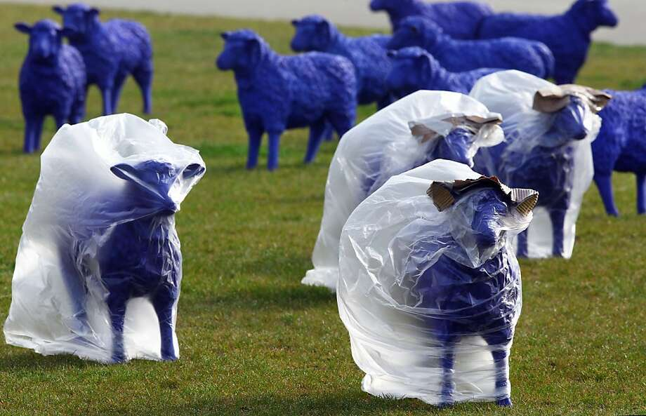 "Blue plastic sheep stand in front of the Schwerin Castle on May 4, 2012 in Schwerin, northeastern Germany. The flock of sheep created by German artists Rainer Bonk and Bertamaria Reetz are part of an art project, that is touring Europe since three years already. According to the artists, they shall transport the peaceful message ""all are equal - everyone is important"". In every of the more than 50 European cities, where the flock was on display, one sheep was left as peace ambassador.     AFP PHOTO / JENS BUTTNER    GERMANY OUTJENS BUTTNER/AFP/GettyImages Photo: Jens Buttner, AFP/Getty Images"