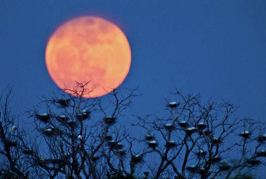 "A ""super moon"" rises above an egret nesting area on the west side of Wichita, Kan., Saturday, May 5, 2012. A supermoon, is the coincidence of a full moon (or a new moon) with the closest approach the Moon makes to the Earth on its elliptical orbit, or perigee. (AP Photo/The Wichita Eagle, Bo Rader) Photo: Bo Rader, Associated Press / The Wichita Eagle"