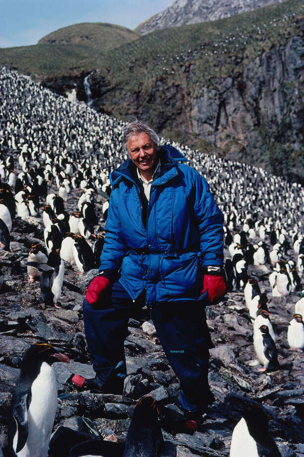Sir David Attenborough, narrator of Discovery Channel's new nature series, 'Blue Planet: Seas of Life,' poses among the Macaroni penguins on South Georgia Island in the South Atlantic, in this undated photo. The four-part, $10-million series, which was produced by Discovery and the British Broadcasting Corp., will air over two nights, Sunday and Monday, Jan. 27-28, at 9 p.m., EST.  (AP Photo/Discovery Channel) / DISCOVERY CHANNEL/BBC
