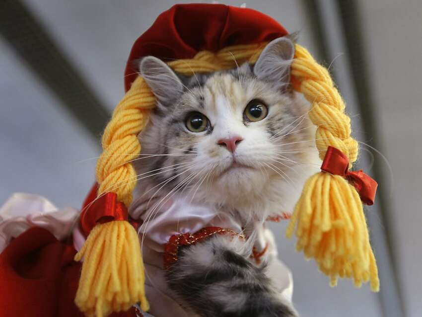 A woman displays her cat in a fashion costume during two-days cat and dog exhibition in Minsk, Belarus, Saturday, May 5, 2012. (AP Photo/Sergei Grits)