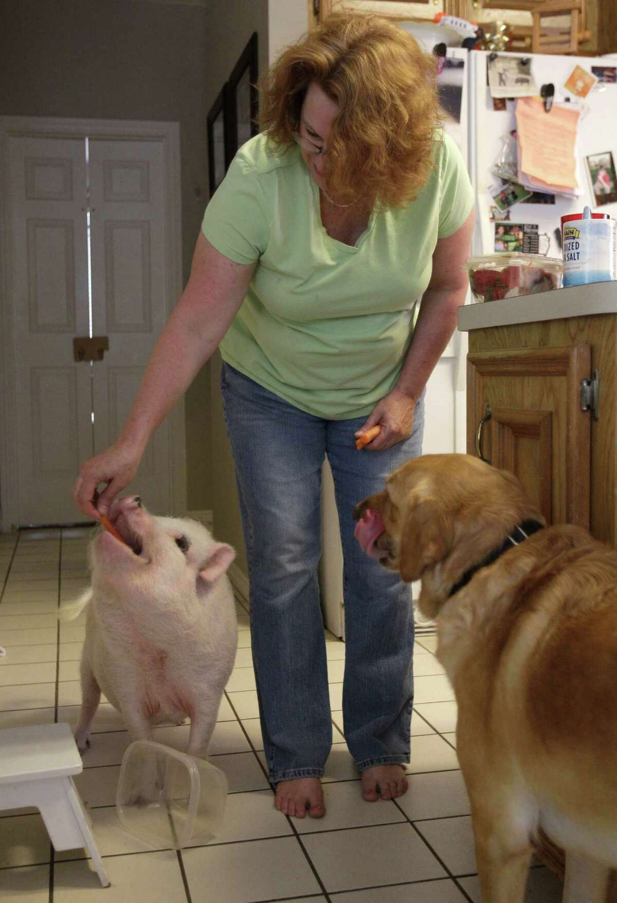 Missy Sardo feeds treats to the family's pets; Wilbur, a Vietnamese pot-bellied pig, and a dog named, Dorey, at their home Monday in Spring..