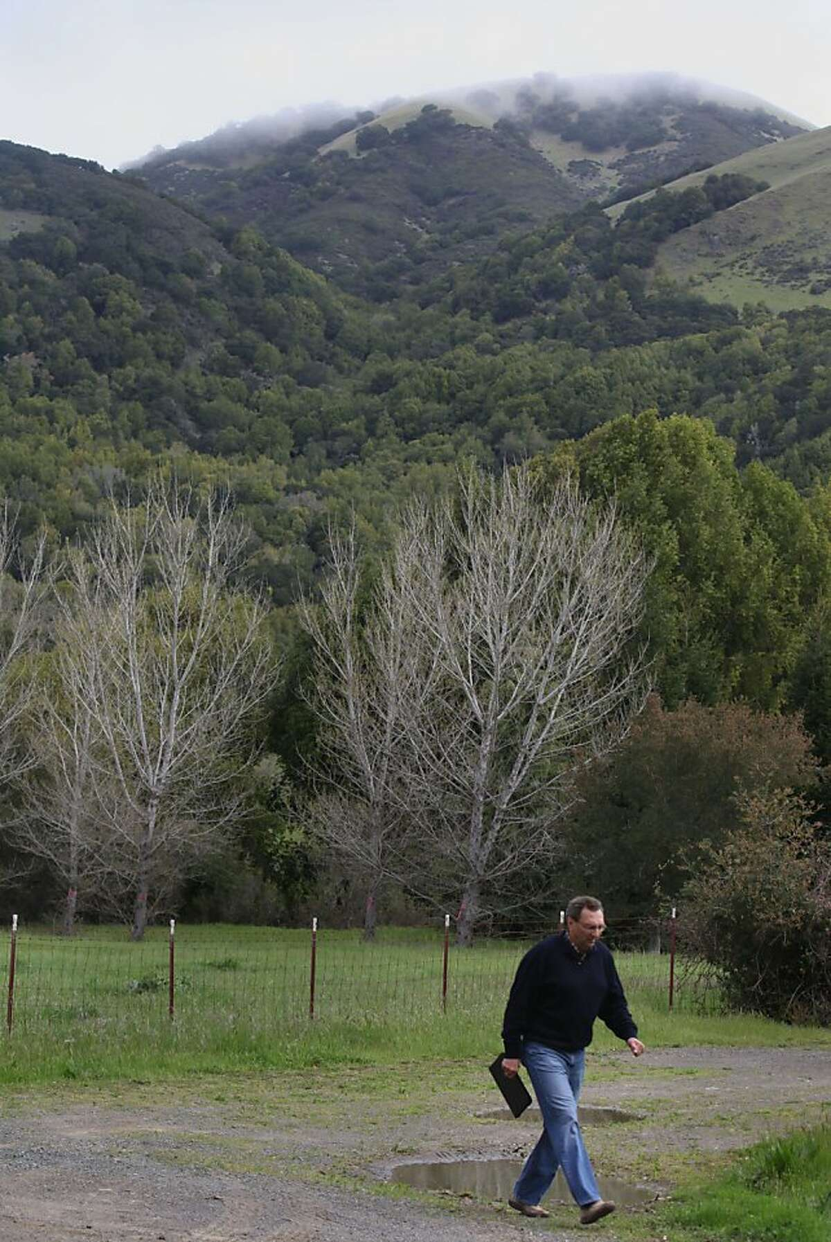 George Lucas will be building a 270,000 square foot digital media production compound on Grady Ranch in San Rafael, Calif., just past the cyprus trees seen in the background as neighbor and environmental consultant Carl Fricke walks on the planned driveway to the complex on Friday, March 30, 2012.