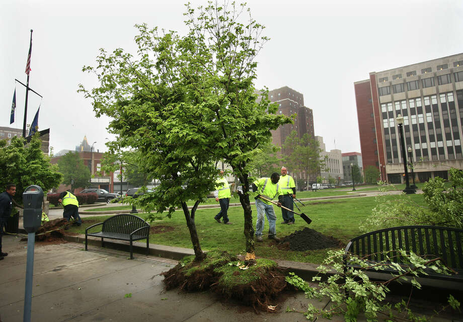 Parks department workers use shovels and a backhoe to remove trees from the park behind the Superior Courthouse on Main Street in downtown Bridgeport on Wednesday, May 9, 2012. The park overlies an underground parking garage, which is now leaking. The tree removal is part of a larger project to fix the leaking facility. Photo: Brian A. Pounds / Connecticut Post