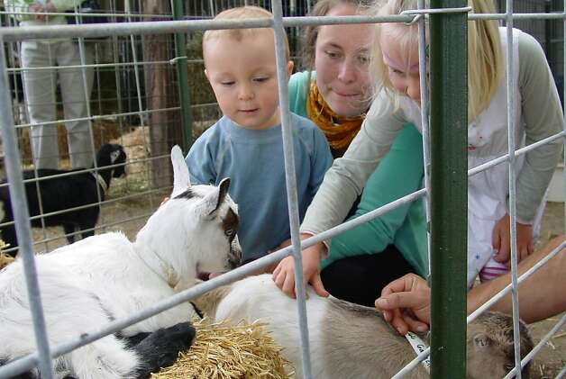Kids meet young goats on a tour at Redwood Hill Farm. Photo: Redwood Hill Farm