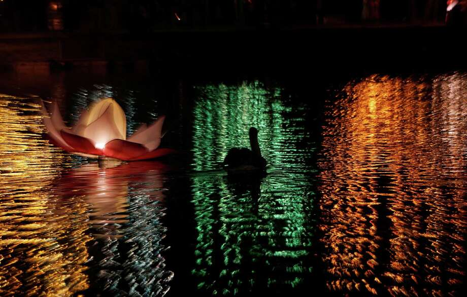 A pelican swims past a floating decorative lantern and reflected lights put up for the Vesakha festival are reflected on the surface of a lake in Colombo, Sri Lanka, Thursday, May 10, 2012. The festival which was marked on May 5 encompasses the birth, enlightenment and demise of Gautama Buddha. (AP Photo/Gemunu Amarasinghe) Photo: Gemunu Amarasinghe, Associated Press / AP