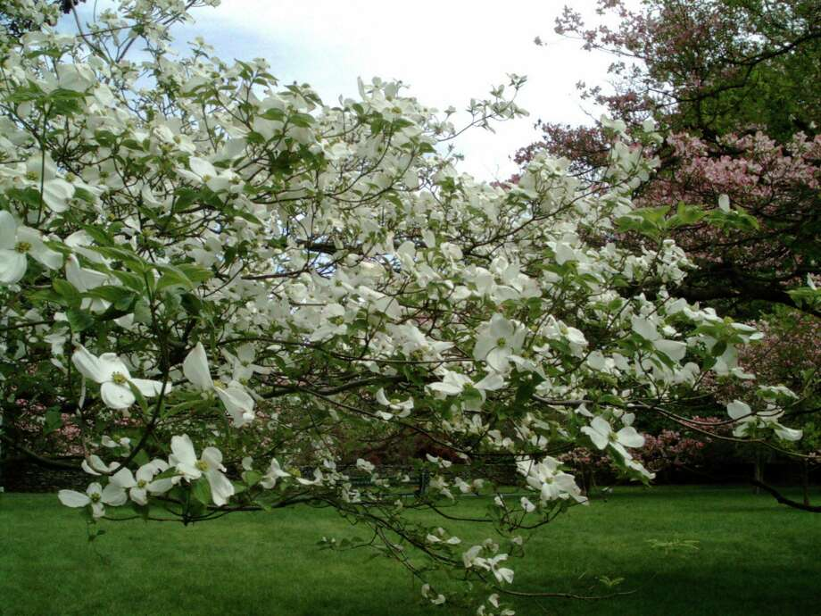 The 77th annual Dogwood Festival on Greenfield Hill, Fairfield, will take place Mother's Day weekend, May 11-13. Photo: Contributed Photo