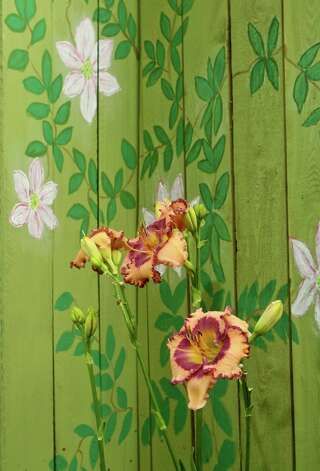 'Sherry Candy' daylily is complemented by Karen Garret's clematis artwork on the fence. Photo: Gary Fountain, Freelance / Copyright 2012 Gary Fountain.