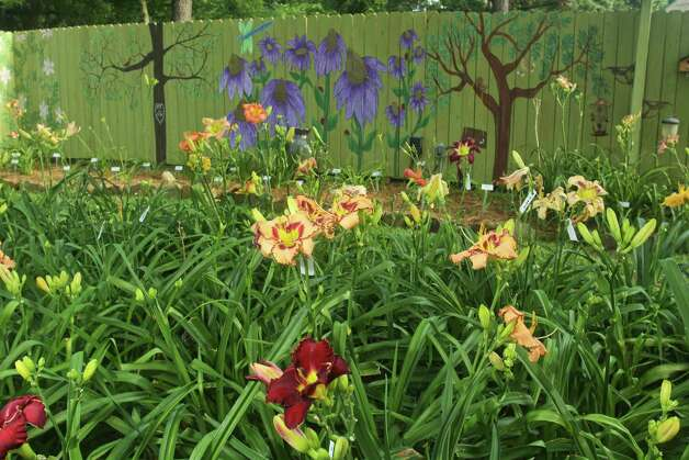 Gardener Loris Garrett is keen on creating daylily seedlings such as those in this bed. An artistic Karen Garrett painted the coneflowers and trees on the garden fence. Photo: Gary Fountain, Freelance / Copyright 2012 Gary Fountain.