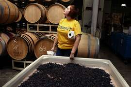 Intern Jacquelyn Fletcher from Massachusetts looking at the hopper while cleaning the crates of grapes after destemming in San Francisco, Calif.,   on Thursday, September 22, 2011.