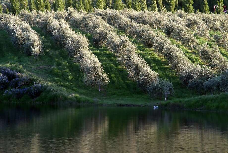 McEvoy Ranch,offers its Orchard Walk and Mill Tour next weekend. Photo: The Chronicle