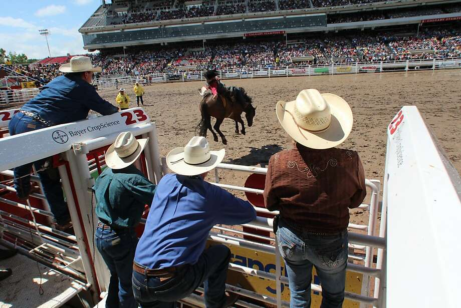 Crew at the Stampede grounds watch a bronc-rider take his turn in the arena. Photo: Spud Hilton, The Chronicle