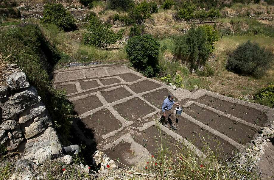 In this photo taken Sunday, May 6, 2012 Palestinian farmer Elayan Shami, 62, plants eggplants in a maze to direct the water downhill from one terrace to another in his field in the West Bank village of Battir. Residents of Battir, one of the last West Bank farming villages that still uses irrigation systems from Roman times say the village's ancient way of life is in danger as Israel prepares to lay down its West Bank separation barrier. (AP Photo/Sebastian Scheiner) Photo: Sebastian Scheiner, Associated Press