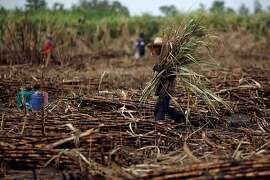 A worker harvests sugar cane in a field near the village of Khan Phram in Saraburi province, north of Bangkok, Thailand, on Wednesday, May 9, 2012. Sugar production in Thailand, the world's second-biggest exporter, in the current crop year may be below a forecast in April because of cane flowering and dry weather, according to the Office of the Cane & Sugar Board. Photographer: Dario Pignatelli/Bloomberg