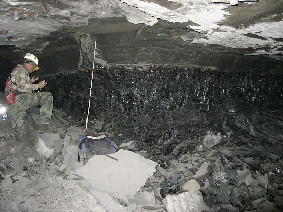 """In an undated handout photo, William DiMichele studies a section of the Springfield Coal fossilized forest. A vast expanse of fossilized trees more than 300 million years old, called a """"botanical Pompeii,"""" could extend as much as 100 miles underneath southern Illinois. (Scott D. Elrick via The New York Times) -- NO SALES; FOR EDITORIAL USE ONLY WITH STORY SLUGGED SCI ILL FOSSIL FOREST BY W. BARKSDALE MAYNARD. ALL OTHER USE PROHIBITED. -- Photo: Scott D. Elrick, New York Times"""