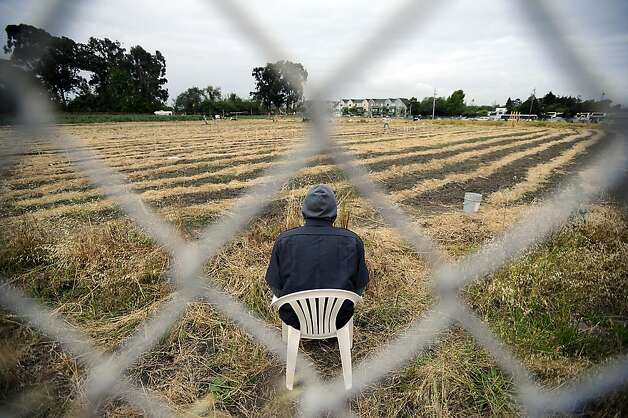 A Security guard is seen seated in side the fence of the Gill Tract. Police raided and cleared out protesters with Occupy the Farm at the Gill Tract in Albany, CA Monday May 14th, 2012 Photo: Michael Short, Special To The Chronicle