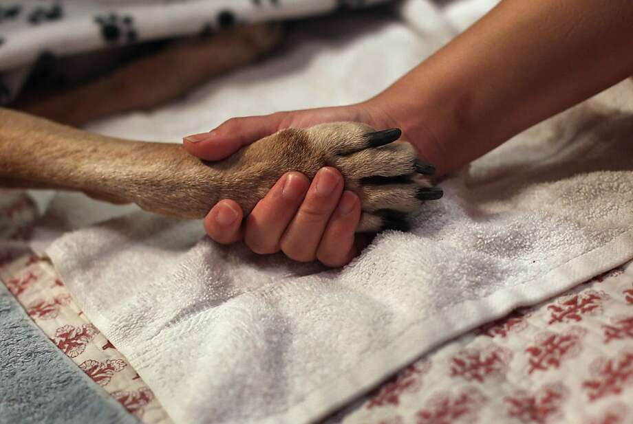 Rest in peace, Rocky:Tomo McLoyd holds the paw of her 14-year-old dog, Rocky as veterinarian Wendy McCulloch euthanizes the pet at their apartment in New York City. McLoyd had made the difficult decision because Rocky could no longer walk. McCulloch runs Pet Requiem, a home veterinary service designed to provide geriatric care and in-home euthanasia for dying pets. Photo: John Moore, Getty Images