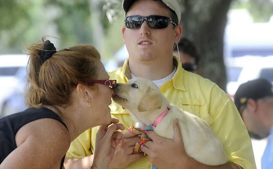Sherri Jordan receives a puppy kiss from 6-month-old lab Pudd'n as his owner Tyler Dickson holds her during the inaugural Dog Club of Wilmington's Battleship Splash Dock Diving Event Saturday, May 12, 2012 in Wilmington, N.C.  (AP Photo/The Star-News, Jeff Janowski) Photo: Jeff Janowski, Associated Press