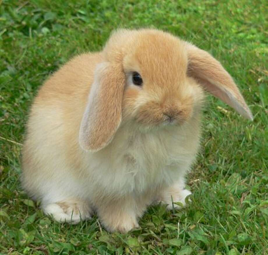 Bunnies: These pets are popular to give during Easter, but 