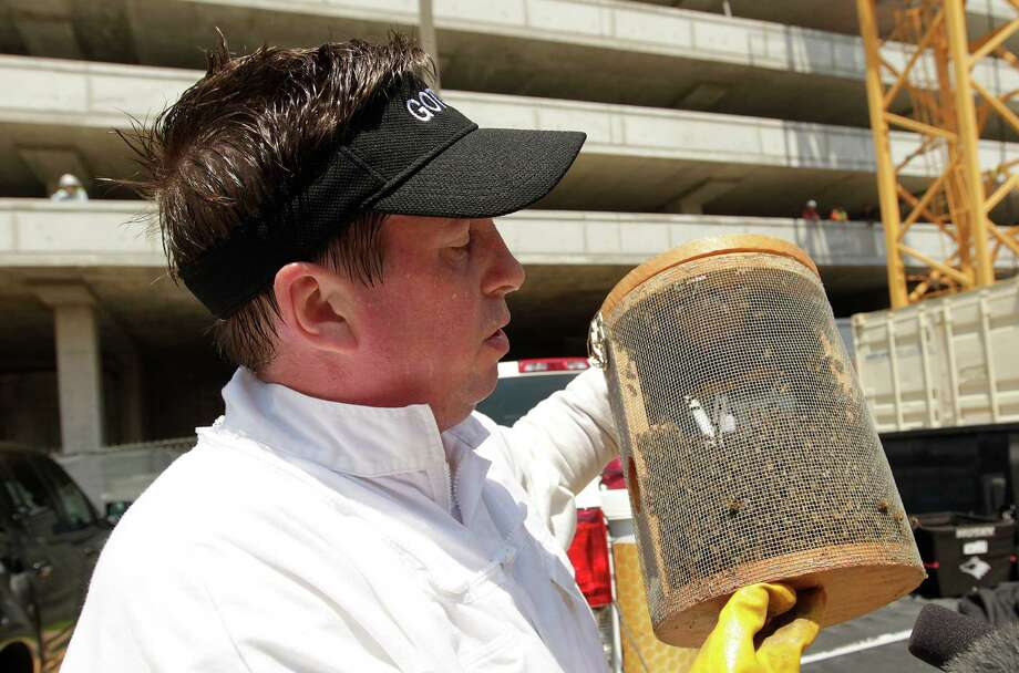 Claude Griffin, owner of Gotcha Pest Control, carries several thousand bees that were removed from a highrise under construction along the 5300 block of Brownway in the Galleria area on Wednesday, May 16, 2012, in Houston. A construction worker was stung by the bees, and management called Gotcha Pest Control to safely them. Photo: Mayra Beltran, Houston Chronicle / Houston Chronicle