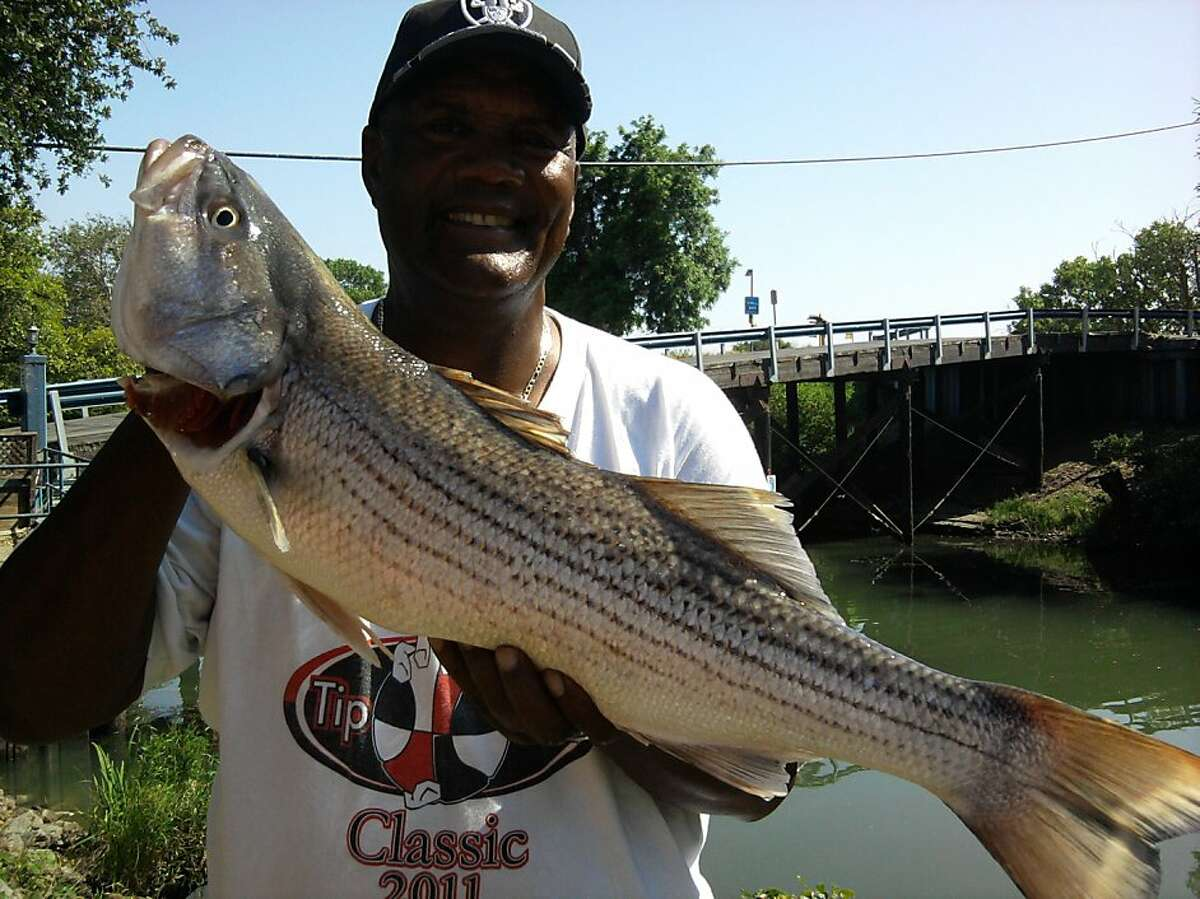 Jim Thomas of Santa Clara with nice striped bass he caught Tuesday afternoon out of Isleton on Sacramento River. Tom Stienstra/The Chronicle