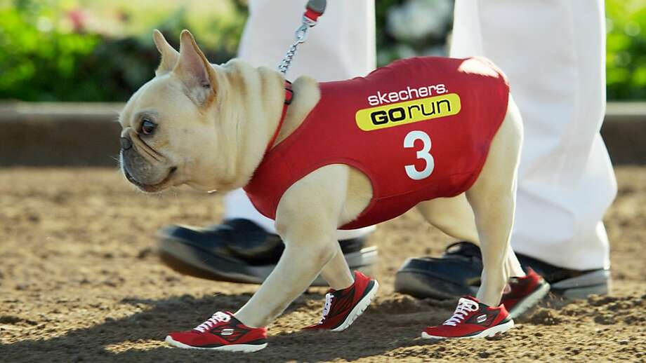 This ad shows Mr. Quiggly, who replaced former Skechers spokeswoman Kim Kardashian, wearing Skechers sneakers in an ad aired during the Super Bowl. Photo: Associated Press
