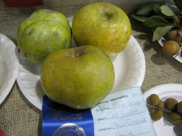 The white sapote, seen at the 2009 Maui County Fair, has a thin skin and creamy, delicate flesh that makes it difficult to transport. Photo: Forest & Kim Starr, Www.hear.org