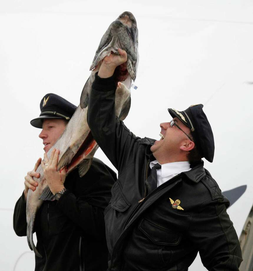 Alaska Airlines Capt. Trent Davey, right, and first officer Andy Kullick, left, hold up a 55 lb. Copper River King Salmon, Friday, May 18, 2012, as the annual first air shipment of the prized salmon arrived from Alaska early Friday morning in Seattle. Copper River salmon are prized for their high oil content and flavor. They typically bring the highest prices at restaurants and fish markets. Photo: AP