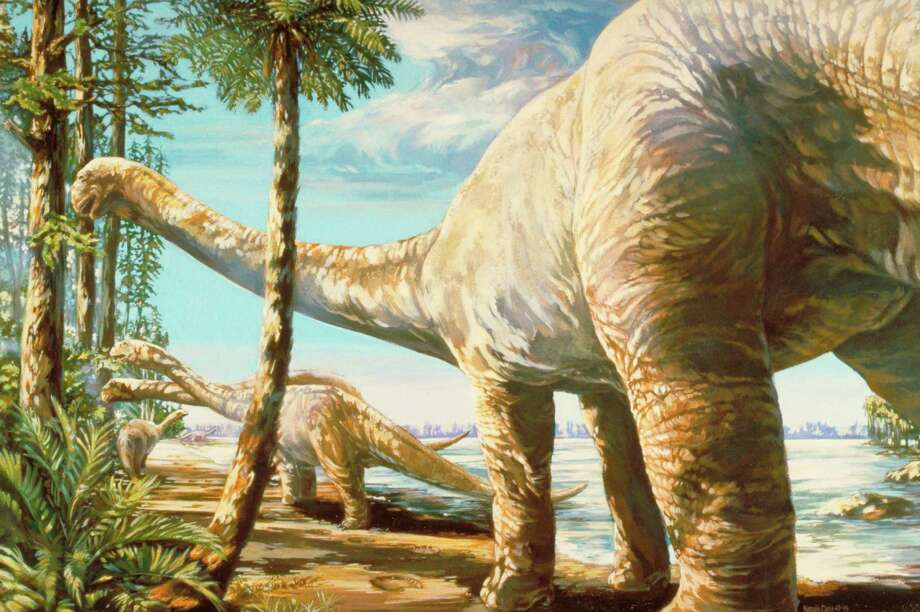 This illustration shows what some researchers believe the Pleuroceolus dinosaur would have looked like. While a student at SMU in Dallas, Peter Rose wrote a paper that showed that the bones identified as the giant dinosaur pleurocoelus, the Texas state dinosaur, were misidentified and were in fact a new dinosaur he named paluxysaurus. Now a Fort Worth lawmaker has filed a resolution in the Texas Legislature that seeks to send Pleurocoelus packing and transfer the state dinosaur title to a very similar but more uniquely Texas species, newly dubbed Paluxysaurus jonesi. (AP Photo/Fort Worth Museum of Science and History) / Fort Worth Museum of Science and