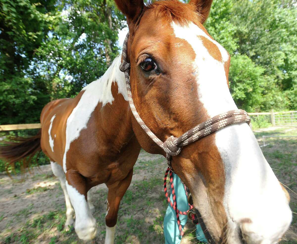 Stable Spirits helps people with mental health problems and others who may need physical therapy, recover through working with horses.