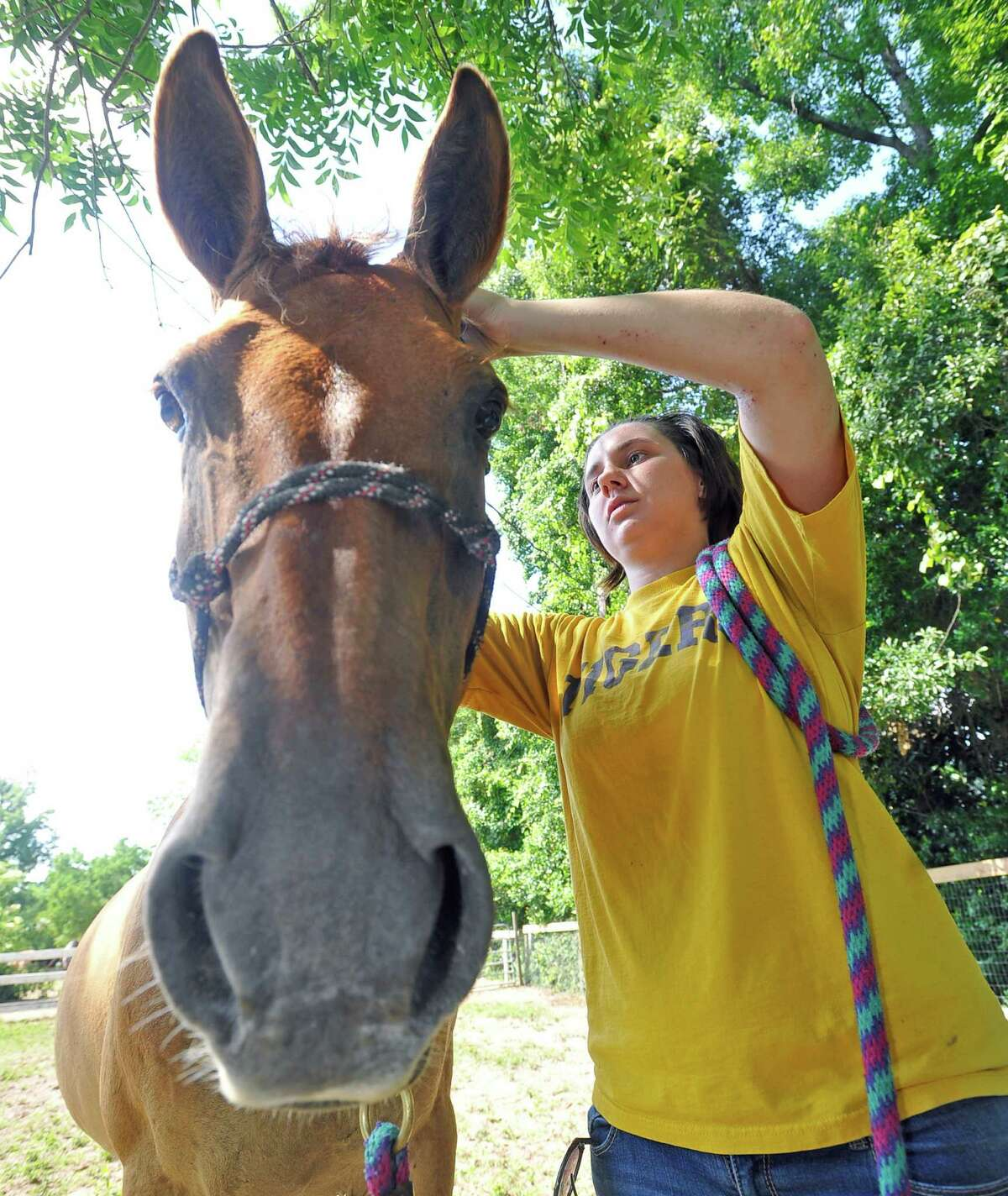 Stable Spirits helps people with mental health problems and others who may need physical therapy, recover through working with horses. Volunteer Crissie Vandehoef, woks on an exercise involving putting a rope bridle on